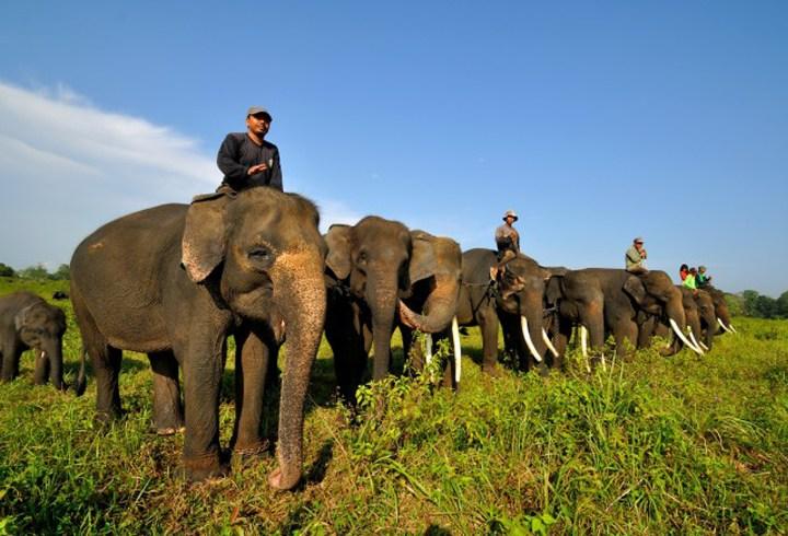 Keindahan Alam Taman Nasional Way Kambas di Bumi Lampung